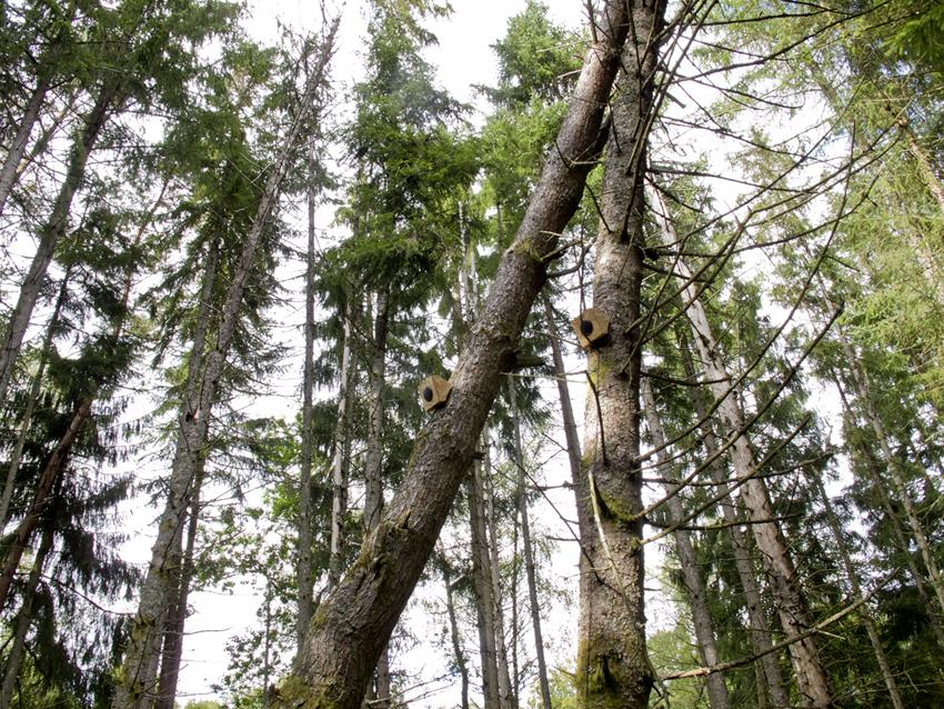timber_2